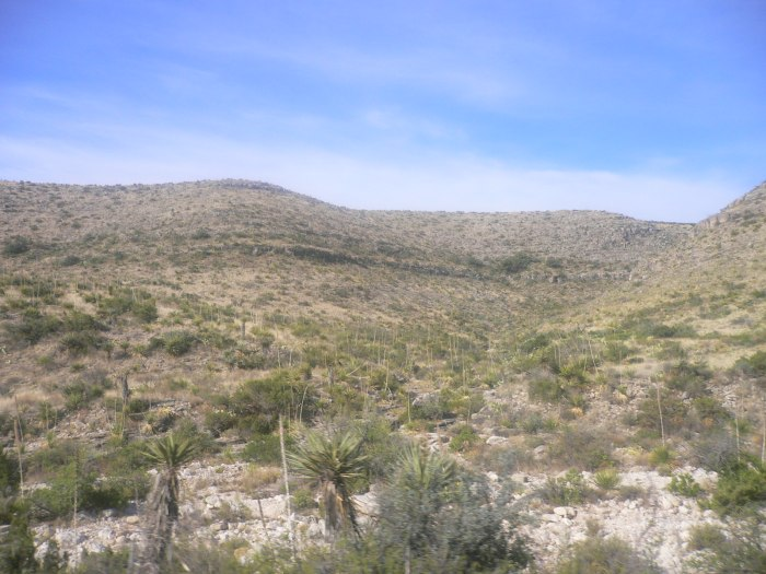 New Mexico Desert